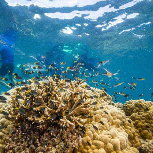 Frankland Islands Cairns snorkel tour coral